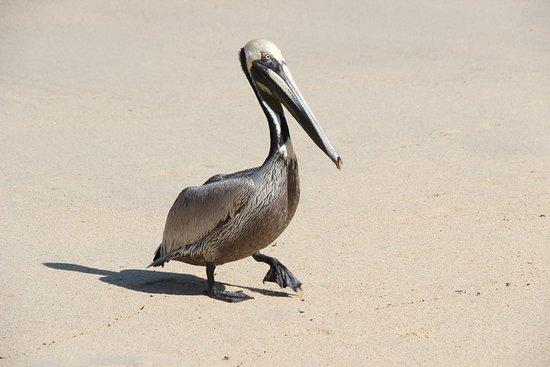 Costa Sur Resort & Spa: Avistaje de Aves