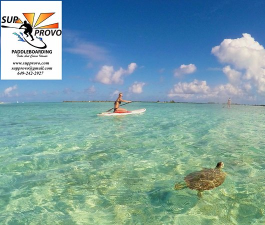 Providenciales: Eco tours by SUP Provo are the best way to explore the beauty here!