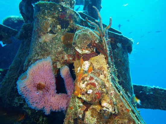 Kittiwake Shipwreck & Artificial Reef: Closest to the surface on tower