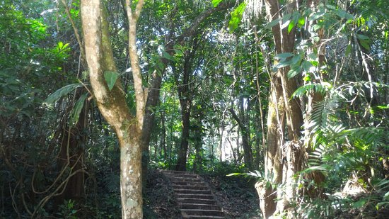 National Park of Palenque: IMG-20170305-WA0027_large.jpg