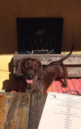 Bogapott: Dog friendly cafe