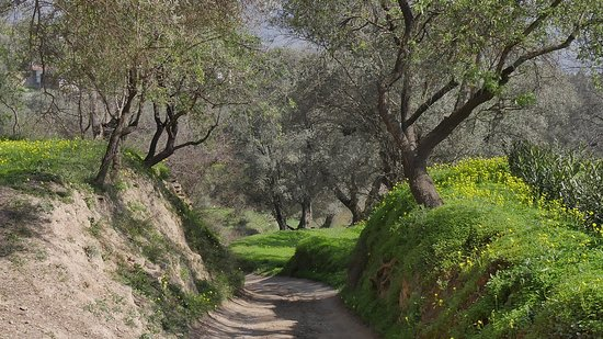 Orgiva, Spain: The driveway to Kaliyoga through surrounding olive groves