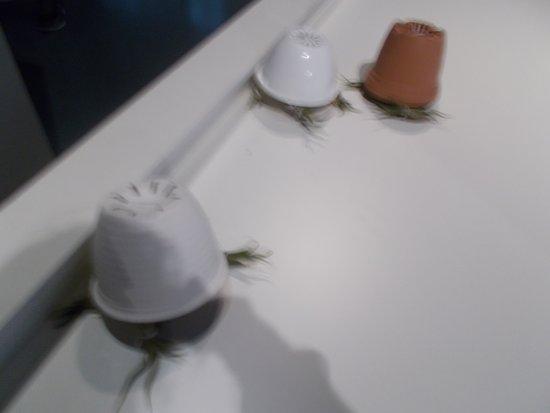 Ars Electronica Center : piante robotiche