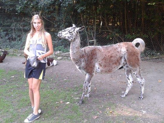 Bretten Tierpark: Lama voederen