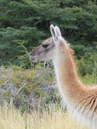 explora Patagonia: Faune