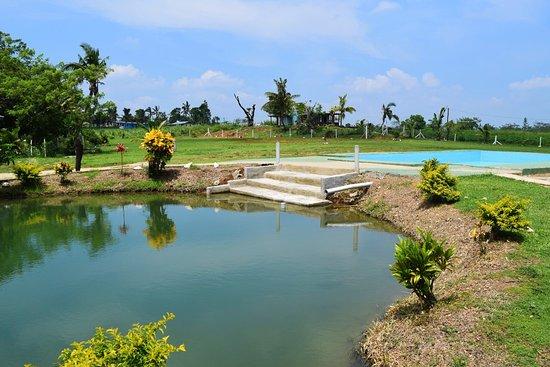 Sabeto Hot Springs and Mud Pool