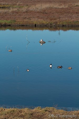 Palo Alto Baylands Nature Preserve: lots of birds in those lakes