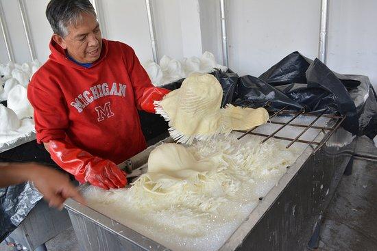 Homero Ortega: Hat bleaching