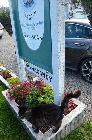 Captain's Legacy B & B: Door cat.