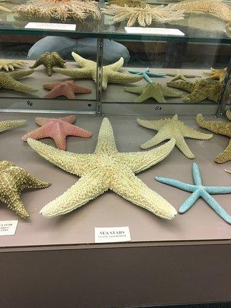 Stones 'n Bones Museum: photo0.jpg