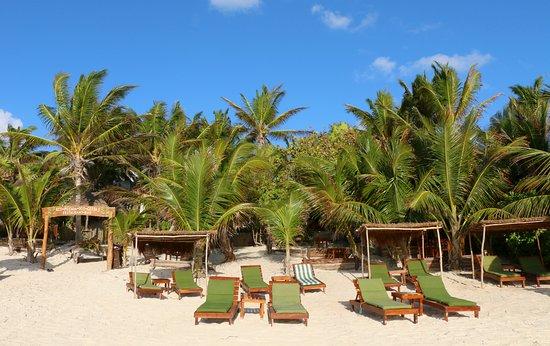 Dos Ceibas Eco Retreat: Nuestra hermosa playa