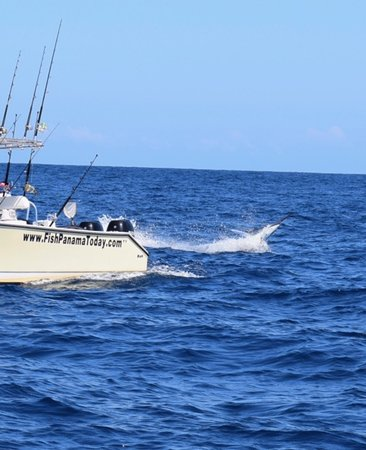 Golfo de Chiriqui National Park, Panama/Panamá: Black Marlin