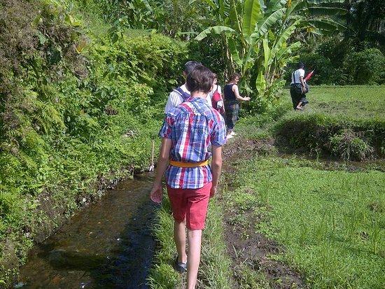 Bali Tour Island Ubud - Day Tours