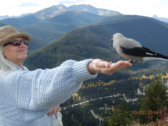 Manning Park, Canadá: Brenda with a Clark's Nutcracker at Cascade Lookout.