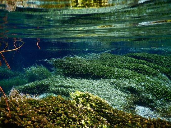 Underwater at Hamurana Springs