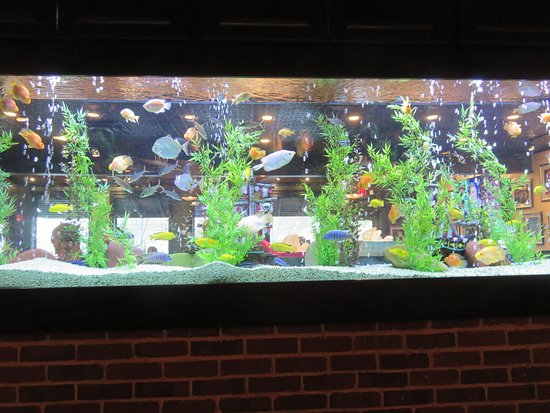 Cheddar's: Tropical fish entertain patrons