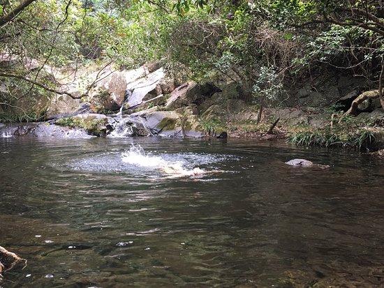 鳳園蝴蝶保育區