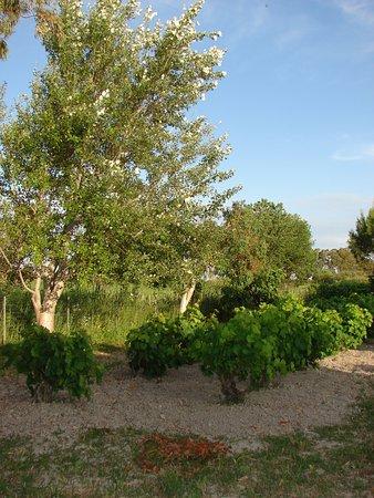 Potokaki, Greece: garden