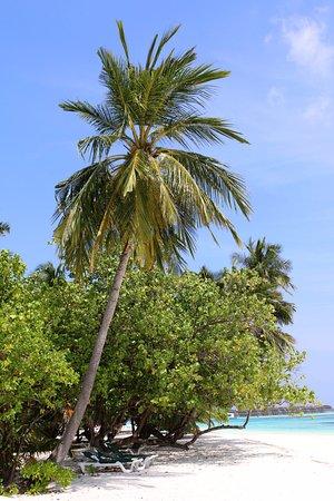 Beach - Picture of Meeru Island Resort & Spa, Meerufenfushi - Tripadvisor