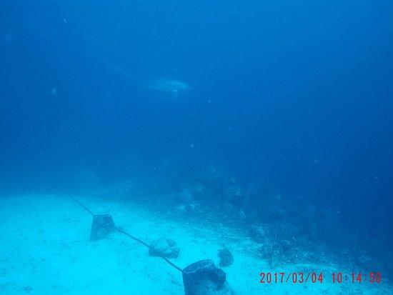 Evolution Diving: photo0.jpg