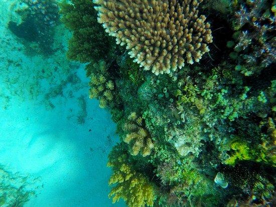 Balicasag Island, Filippinene: photo4.jpg