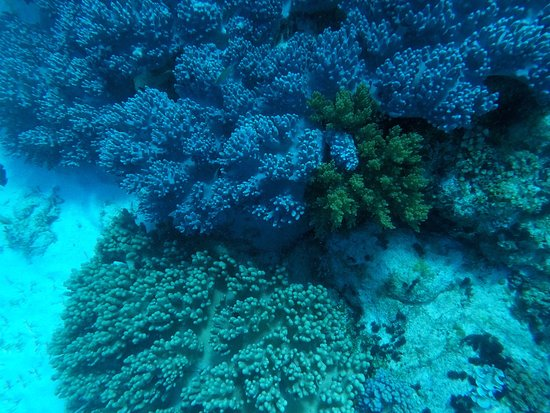 Balicasag Island, Filippinene: photo5.jpg