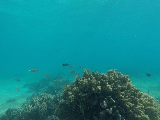 Balicasag Island, Filippinene: photo7.jpg