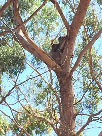 Hanson Bay, Αυστραλία: photo0.jpg