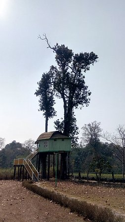 Gorumara Elephant Camp : the tree house
