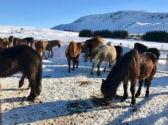 Laxnes Horse Farm: photo2.jpg
