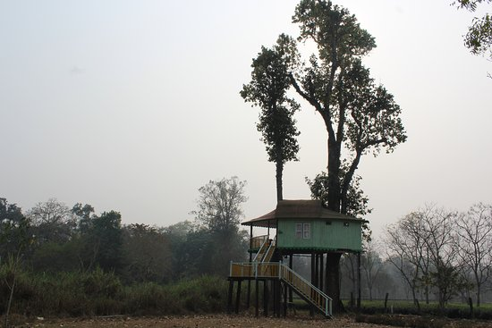 Gorumara Elephant Camp : Teesta tree house