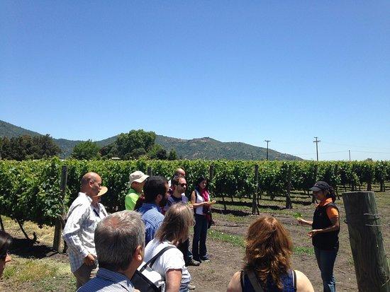 Ruta del Vino Valle de Colchagua