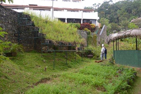 Kitchen Garden Lemongrass Crop Picture Of Cinnamon Citadel Kandy