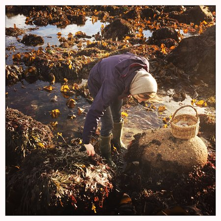 Cornwall, UK: Rachel teaching seaweeds (from course participant)