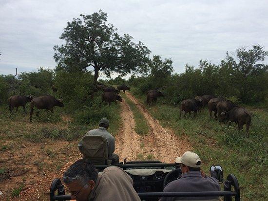 Timbavati Private Nature Reserve, Republika Południowej Afryki: photo2.jpg