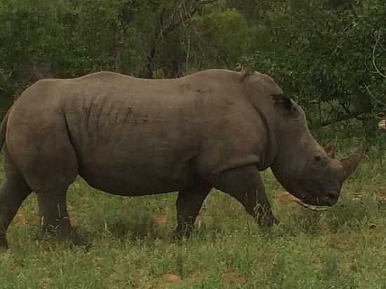 Timbavati Private Nature Reserve, Republika Południowej Afryki: photo7.jpg