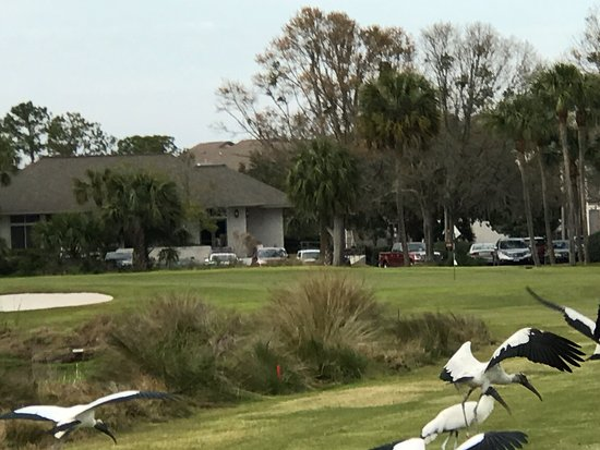 Sea Palms Resort Golf Course: The course featured some native wildlife