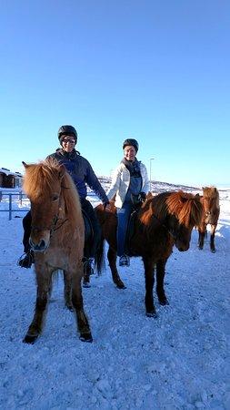 Kopavogur, Iceland: Sweet well trained Icelandic horses!