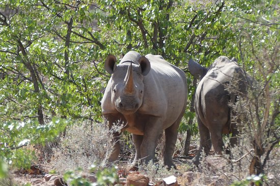 Outjo, ناميبيا: Grootberg, Maria and Mario