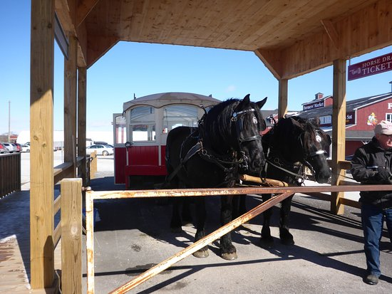 St. Jacobs, Canadá: Horse drawn Car Ride