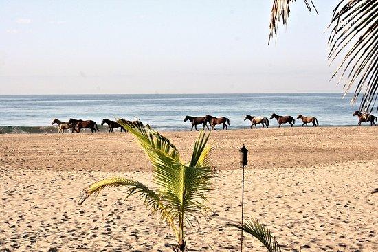 Puerta Paraíso Hotel Boutique : Horses on the beach.