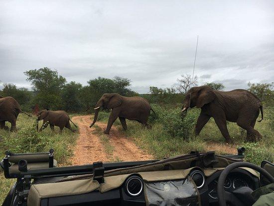 Garonga Safari Camp: photo5.jpg
