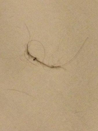 Newbury Hotel : hair on my pillow may be dog hair? vile