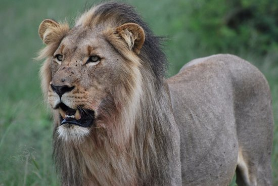 Etali Safari Lodge Bild
