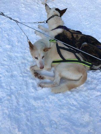 Arctic Husky Farm: photo0.jpg