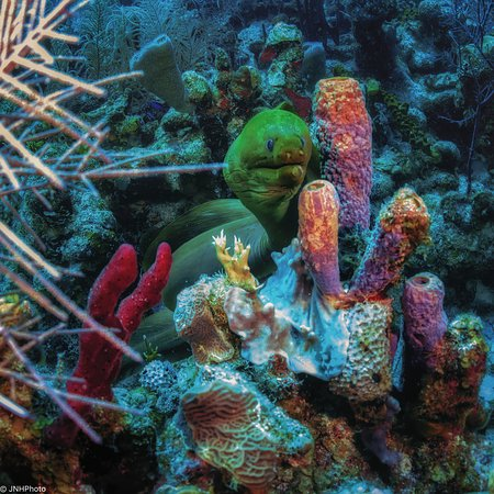 Turneffe Island, Belize: Hard Corals are beautiful in Belize
