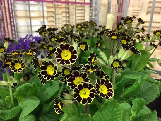 Unusual Flowers - Picture of New Covent Garden Market, London ...