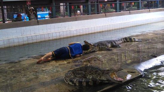 Photo of Nature Preserve Samutprakan Crocodile Farm and Zoo at Old Sukhumvit Highway, Bangkok, Thailand