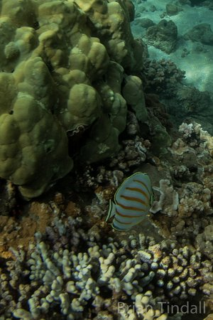 Honaunau, Havaí: Snorkling with a GoPro