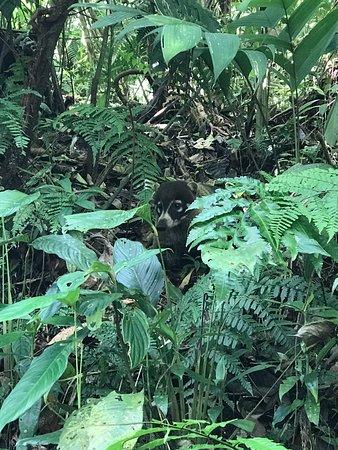 Национальный парк Вулкан Тенорио, Коста-Рика: photo1.jpg